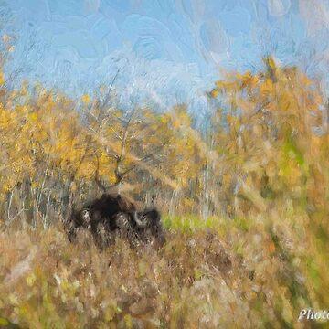 Monetish Bison by PhotosbySylvia