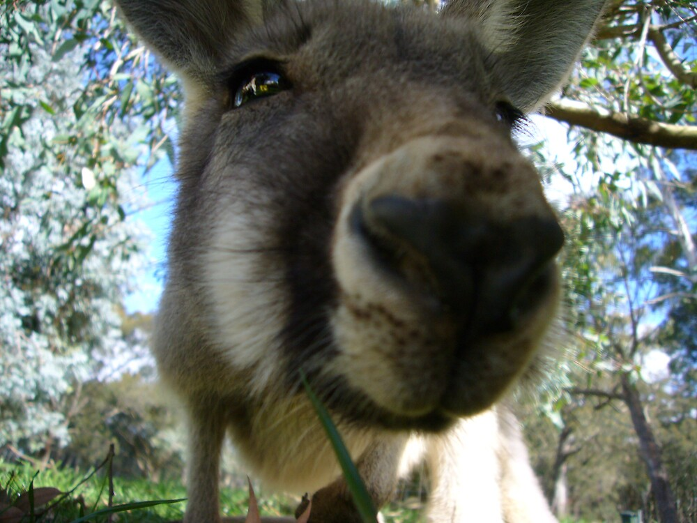 Kangaroo by natalieho0711