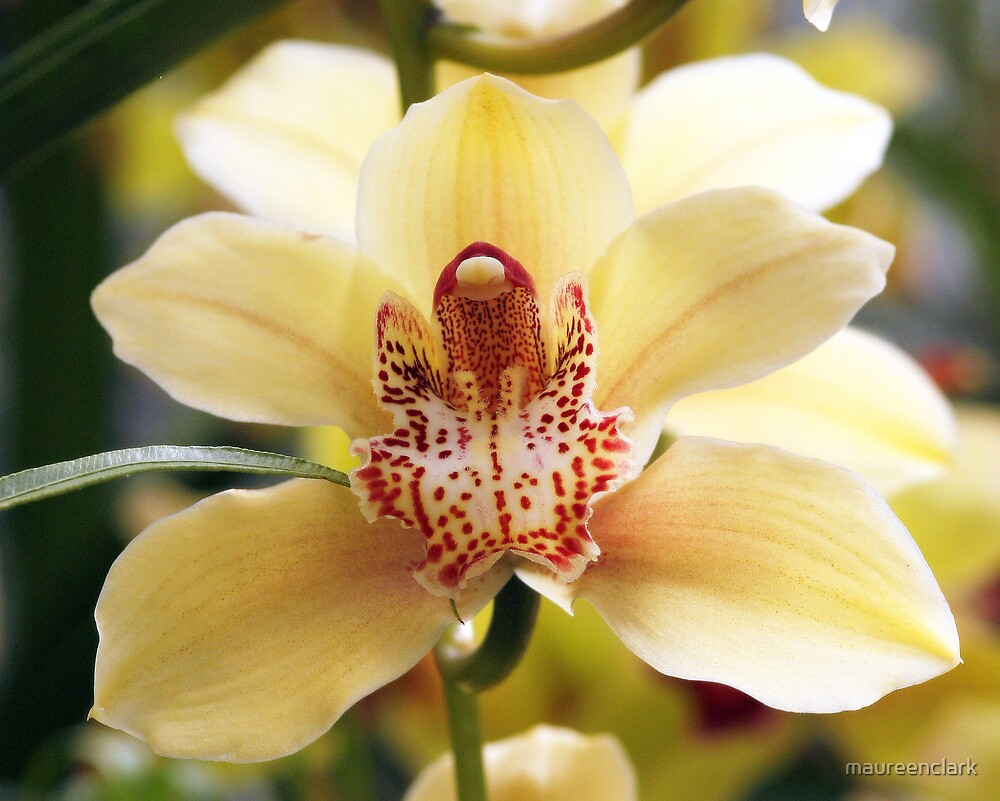 Orchids 1 by maureenclark