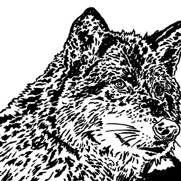 Wolf Black and White Portrait by jtownsend