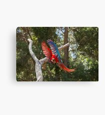 A Jewel In Flight Canvas Print