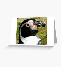 HUMBOLDT PENGUIN close up Greeting Card
