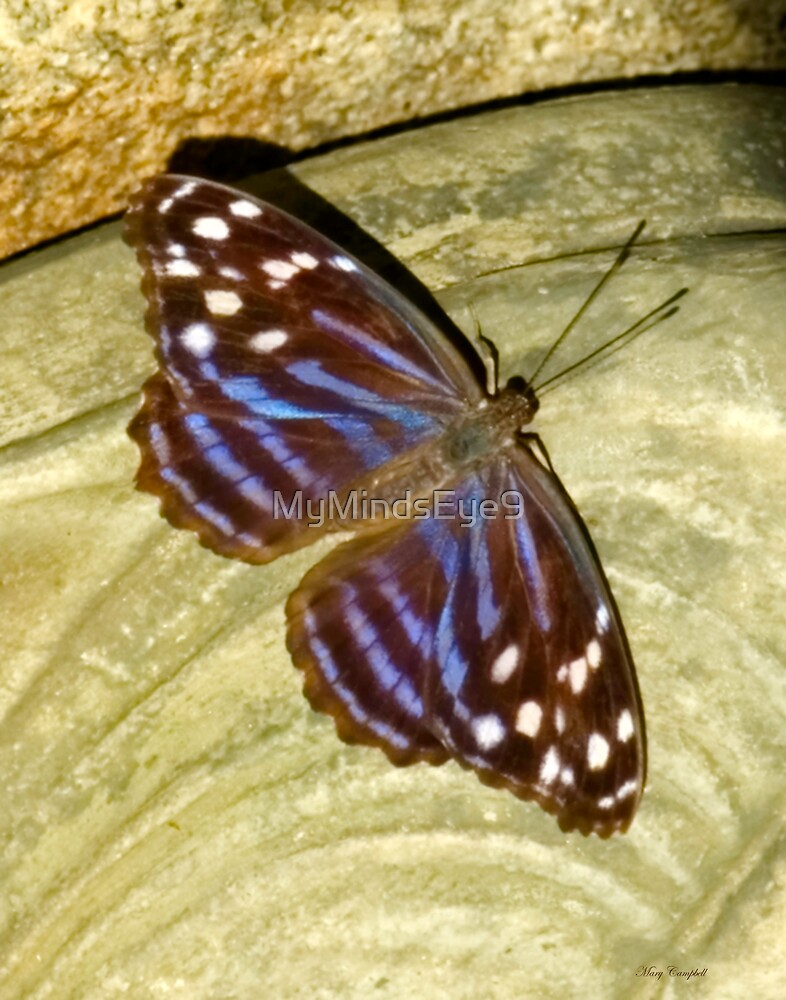 Brown Beauty by Mary Campbell