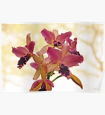 Queen Of Orchids Poster