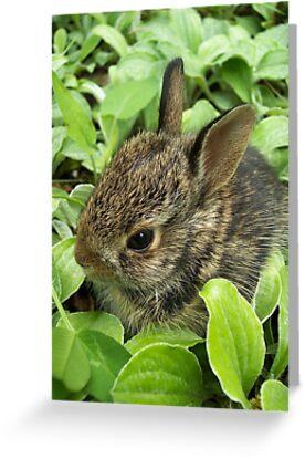 Sweet Baby Rabbit by NatureGreeting Cards ©ccwri