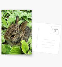 Sweet Baby Rabbit Postcards