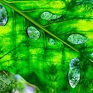Green composition by Manon Boily