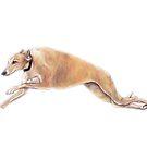 Running Greyhound by Charlotte Yealey