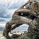 Mammoth Maybe ...  Monmouth Beach, Lyme , Dorset by lynn carter