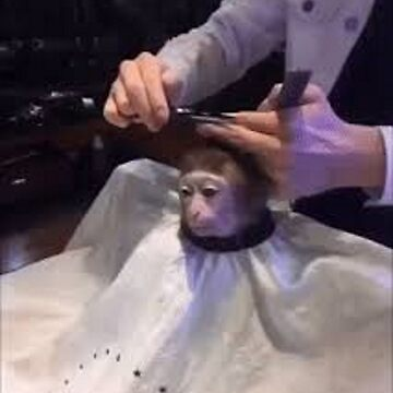 Monkey Gettin' A Haircut by sp00kem