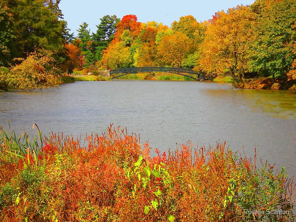Celebrate Fall by Rosalie Scanlon