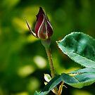 New Love by Pamela Hubbard