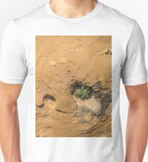Life on Bare Rock - Delicate Plants on Rough Limestone T-Shirt