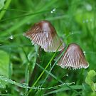 Fungi in my Country Garden by AnnDixon
