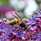 Wasp on a Purple Hydrangea by Ludwig Wagner