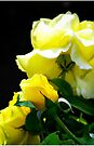 bright shining yellow roses by Beth Brightman