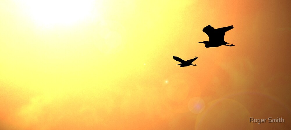 'Flight' by Roger Smith