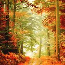 « Fall painting » par Philippe Sainte-Laudy