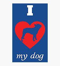 Bosten Terrier - I Love My Dog Photographic Print