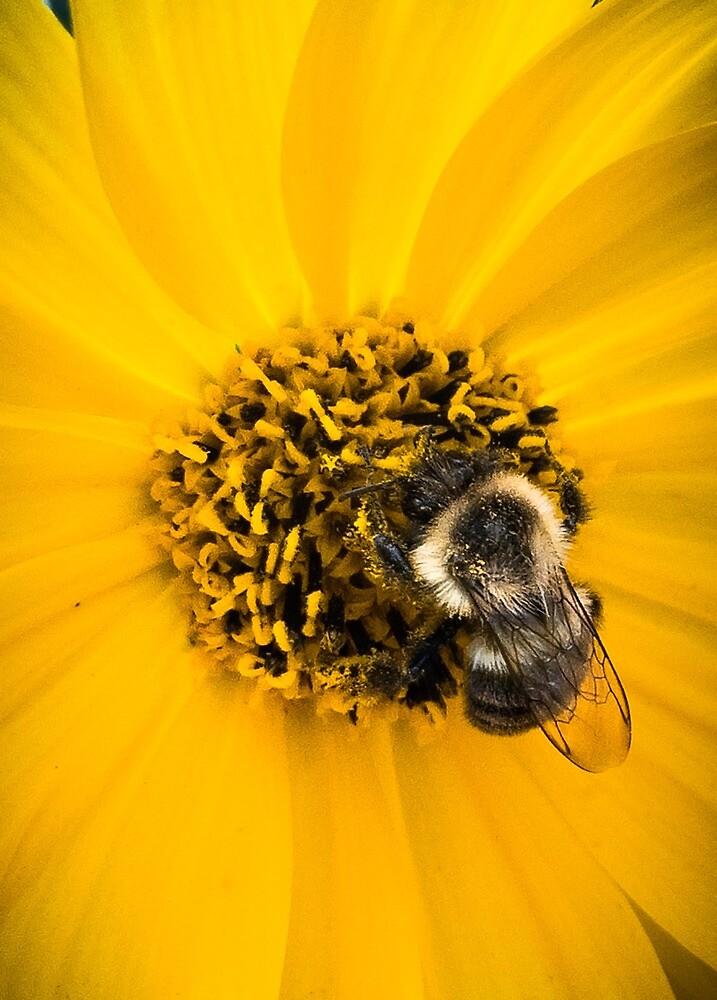 Seepy Bumblebee by Gary Hoare