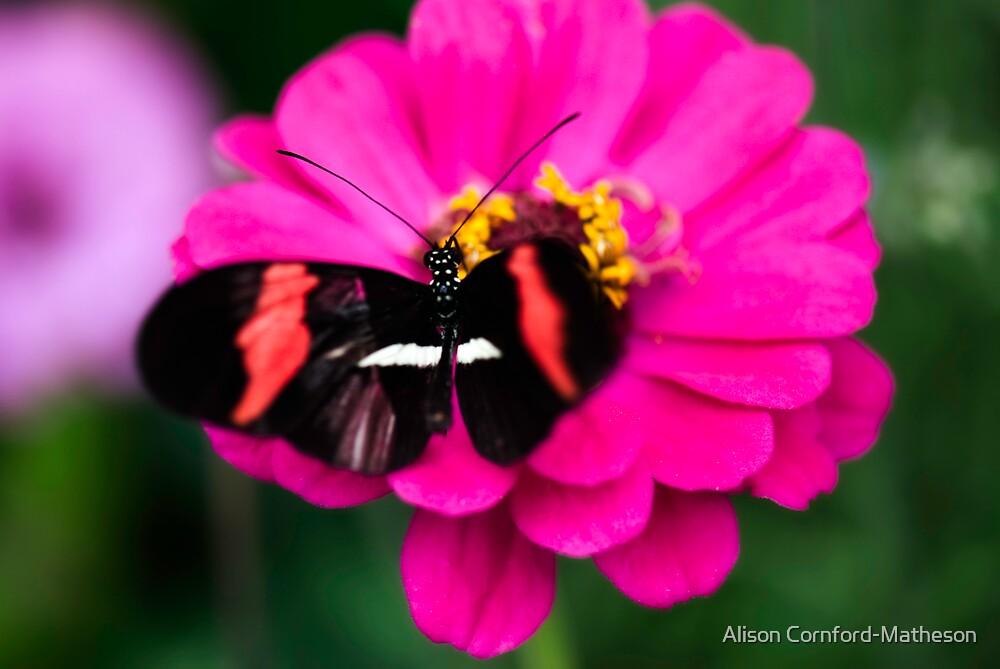 Butterfly Garden by Alison Cornford-Matheson