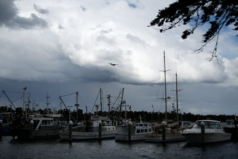 Storm Abrew by Kathryn Steel