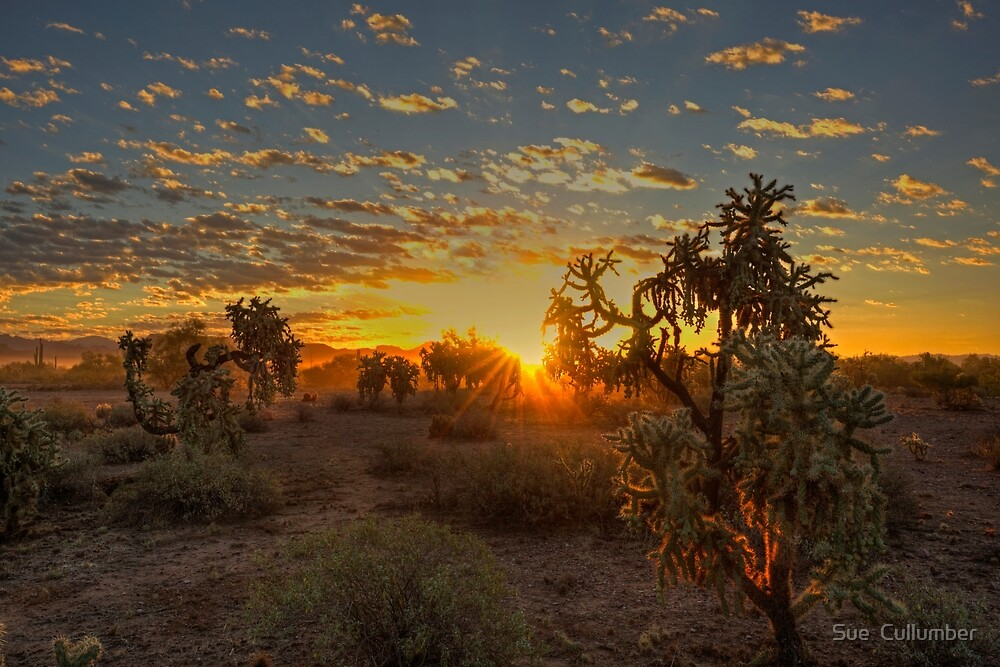 Sonoran Sunrise by Sue  Cullumber