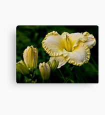 """First Knight"" Daylily Canvas Print"