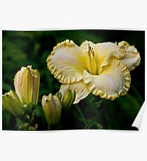 """""""First Knight"""" Daylily Poster"""