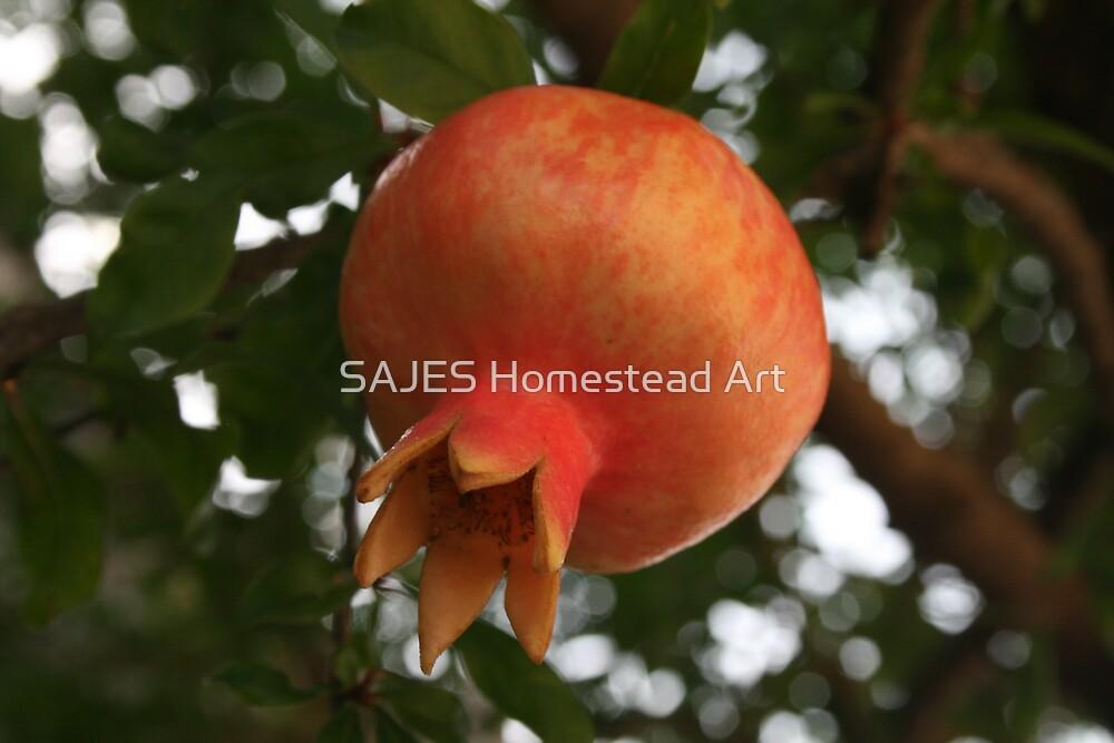 Pomegranate by Sue Thompson