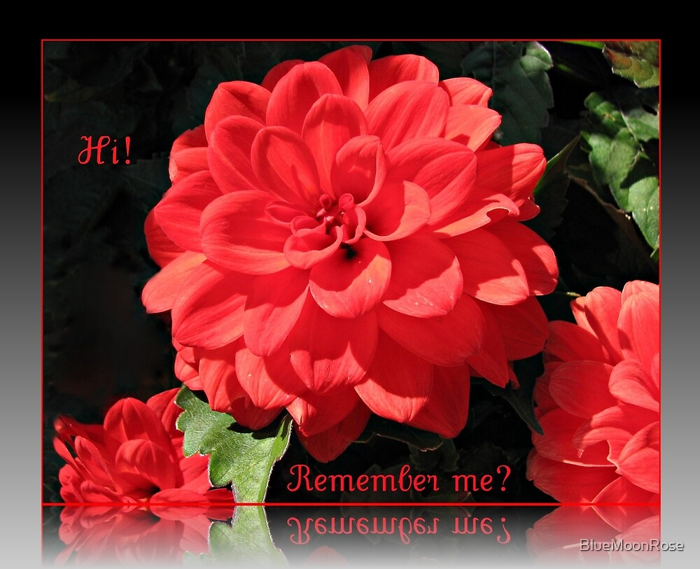 Hi! Remember Me?  - Dreamy Red Dahlias Greeting Card by BlueMoonRose