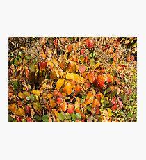 Autumn's Paint Brush Photographic Print