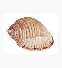 Sea Snail Photographic Print