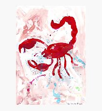 Scorpion Photographic Print