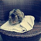 Relaxed kitten; lounging cat; the local kitten, house cat by gabriellaksz