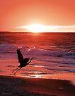 Sunrise Flight by Jan Cartwright