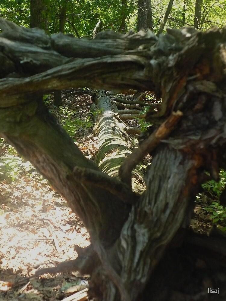 fallen tree by lisaj