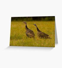 Osceola Turkeys Greeting Card