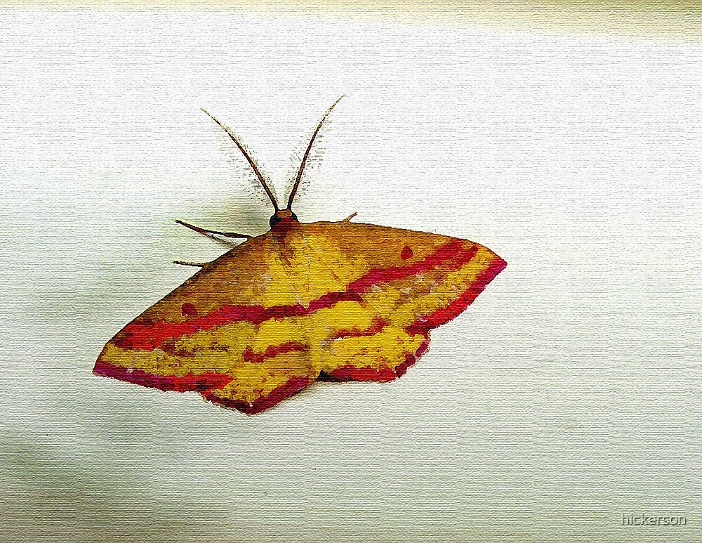 Moth by hickerson