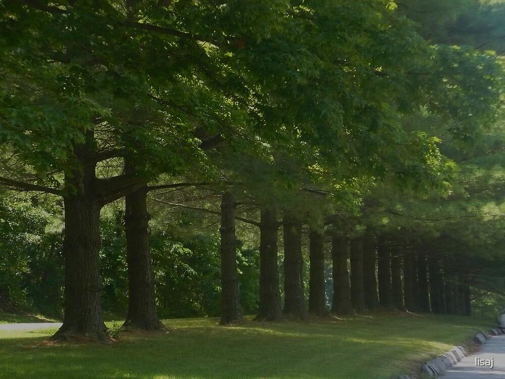 tree line by lisaj