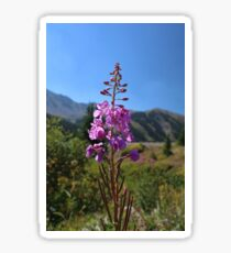 A-Basin Wildflower #2 Sticker