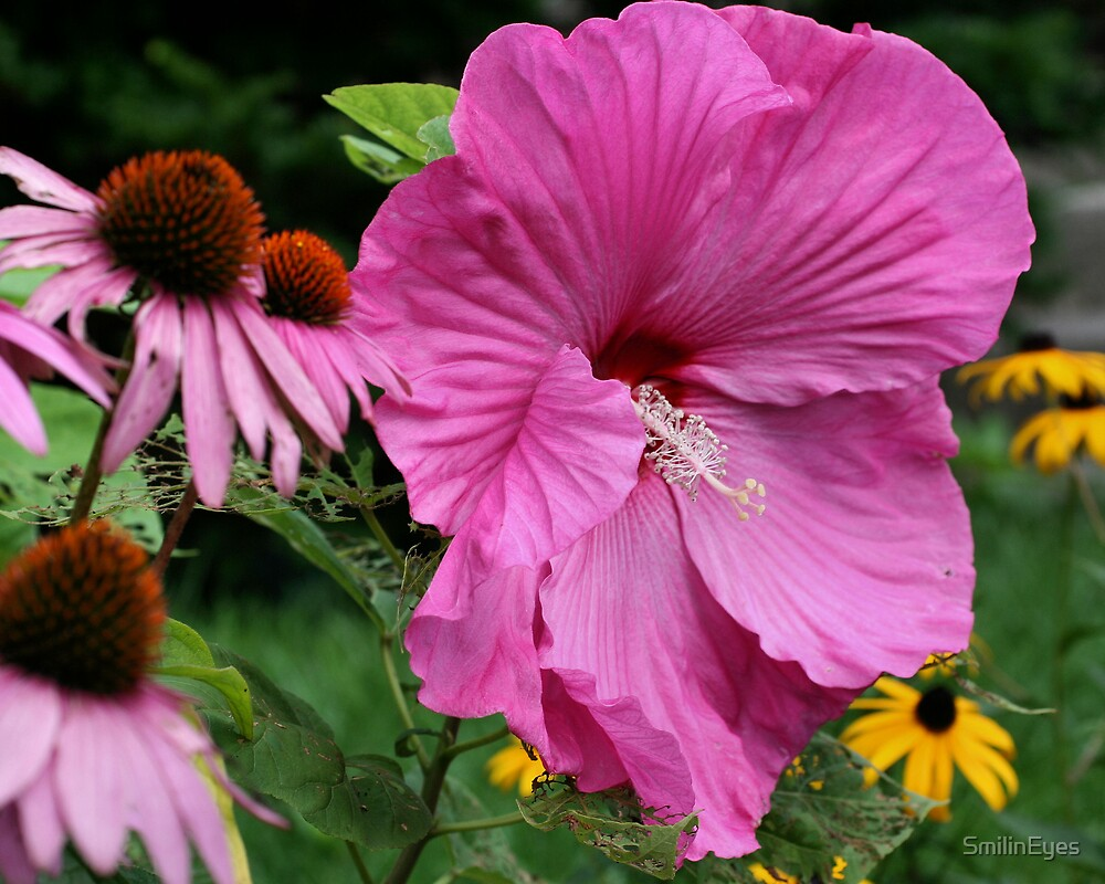 Hibiscus And Friends by SmilinEyes