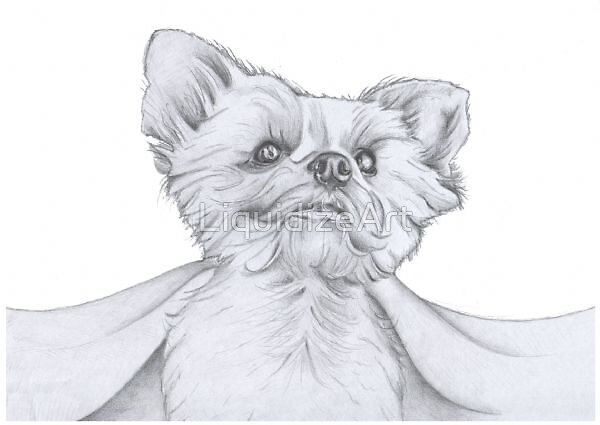Yorkshire Terrier Sketch by LiquidizeArt