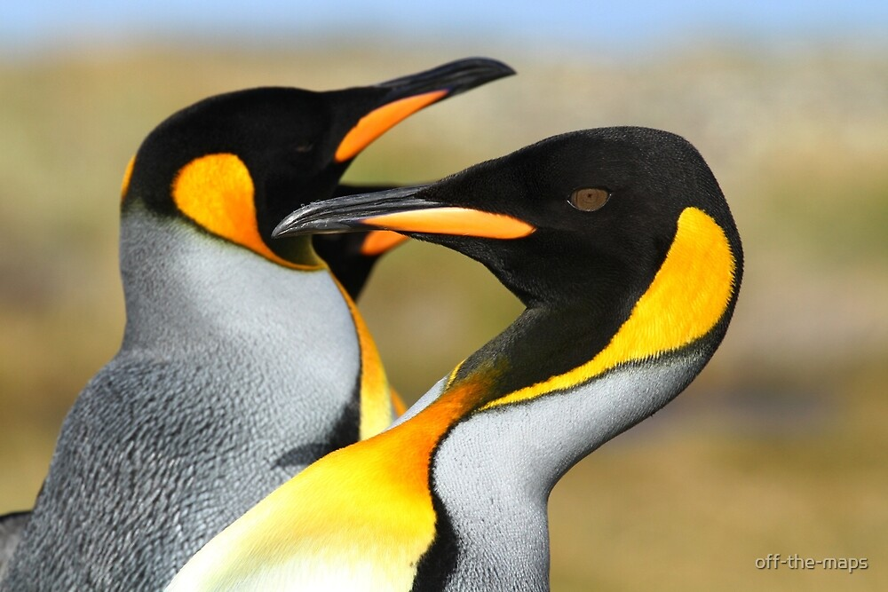 Proud king penguins by off-the-maps