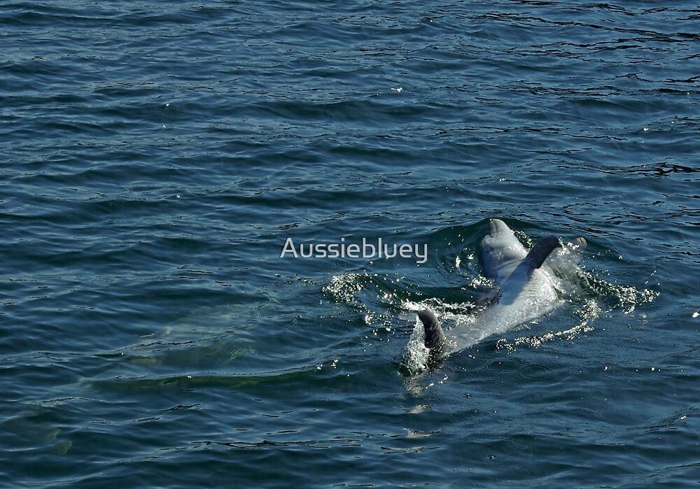 Having Fun. by Aussiebluey
