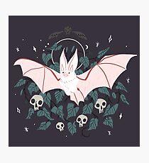 Lámina fotográfica Familiar - Desert Long Eared Bat