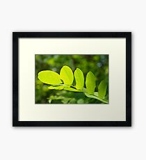 Leaf Structure Framed Print