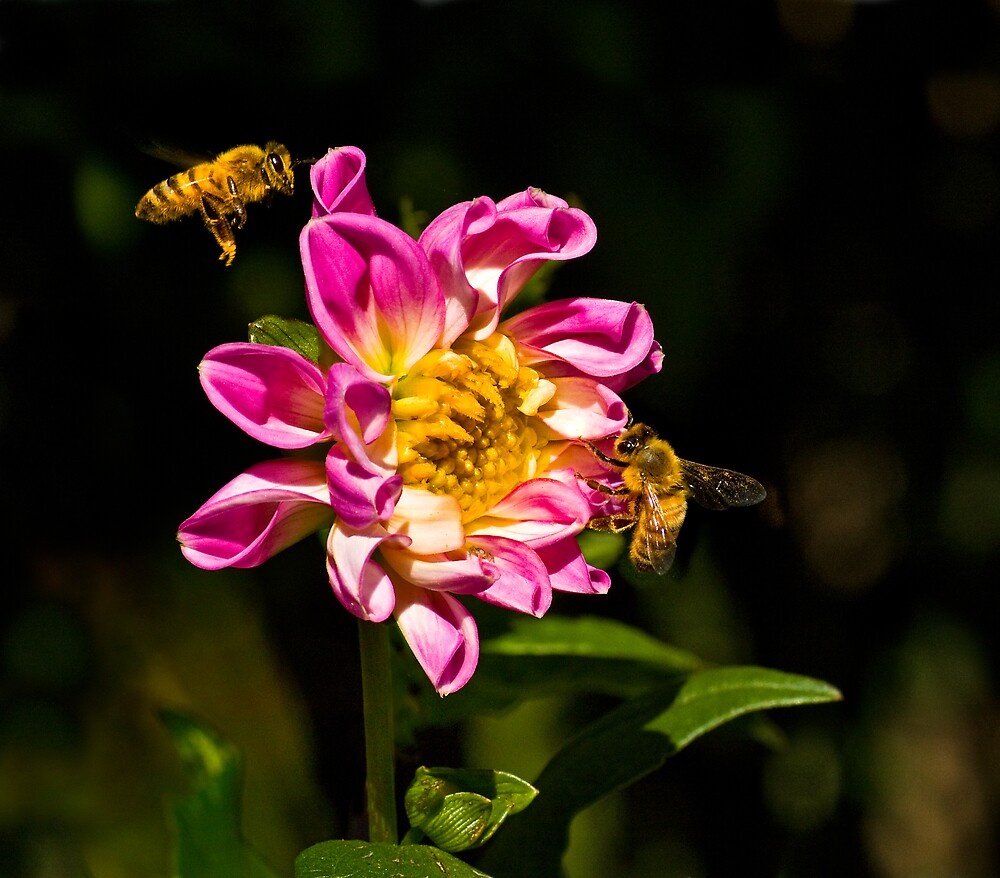 POLLEN COLLECTORS  by Sandy Hill