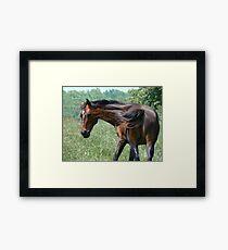 Flippant Horse Framed Print