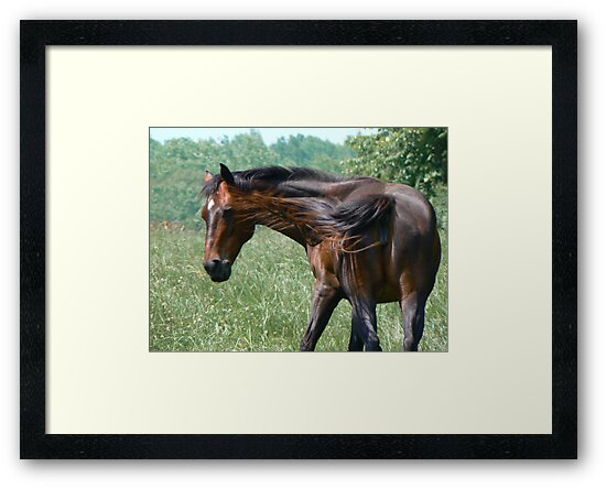 Flippant Horse by Marie Terry